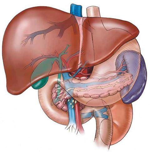 El Ser Humano es mucho más que un cuerpo lleno de órganos. Parte II ...
