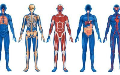 Anatomía, Fisiología y Clasificación de Enfermedades