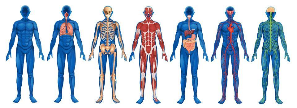 BLOG DE REFLEXOLOGÍA PODAL | Ranvvai | Cursos y Terapias